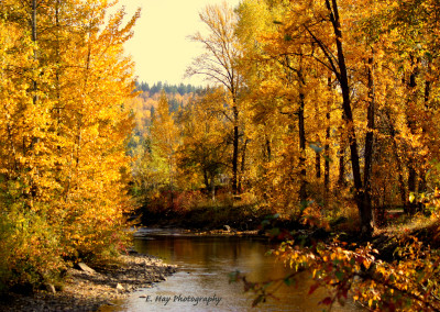Baker Creek By Lizzy Hay