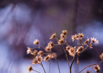 Faded Beauty by Amy Mitchell