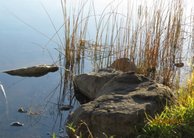 Croc- Rock at Dugan lake boat launch in 150 Mile House By Rebecca Pickard